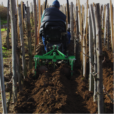mini-trattore vigne siciliane 2