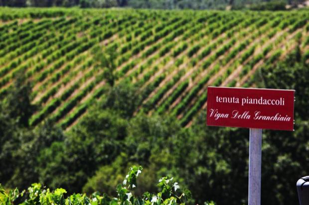 Piandaccoli vini autoctoni toscani 1