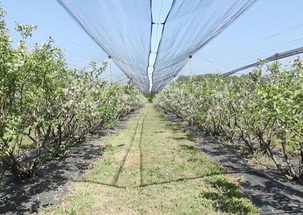 azienda agricola millefrutti 1