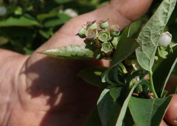 azienda agricola millefrutti 3
