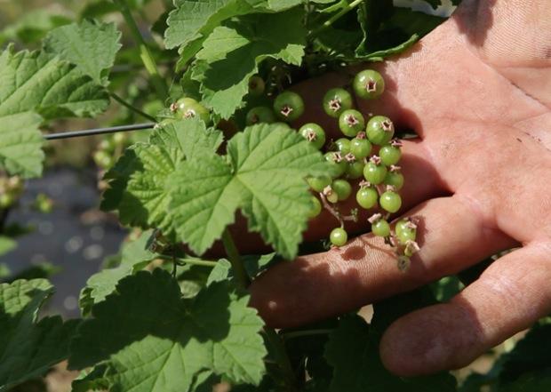 azienda agricola millefrutti 4