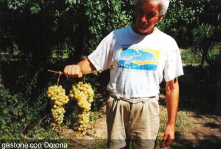 vino dorona venezia 3