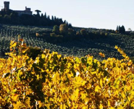 colorino vero vitigno autoctono toscana 2