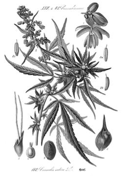 ricette con la cannabis 2