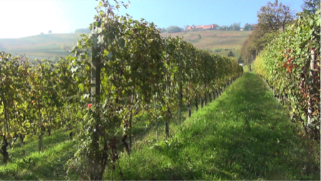 beppe rinaldi arte di fare vino 9
