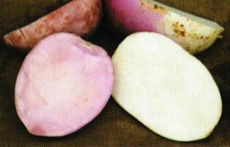 brovada rape fermentate nelle vinacce 8