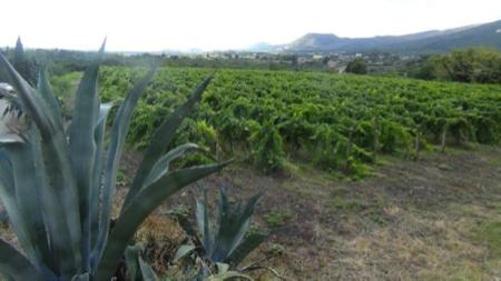 murgo da Etna vino Nerello Mascalese 4