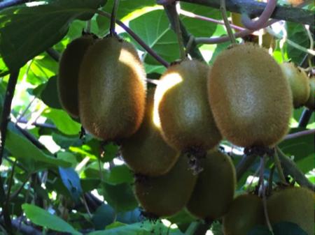confetture di kiwi di schiavon 1