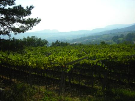 vini veronesi cantina vinicio bronzo 1