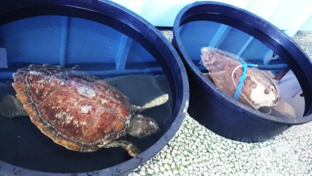 Il centro che salva tartarughe marine a brancaleone rc for Tartarughe in amore