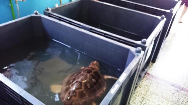 Il centro che salva tartarughe marine a brancaleone rc for Vasche per tartarughe marine