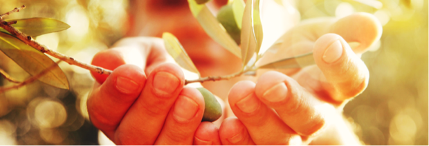 la cornula olio d oliva della puglia 3
