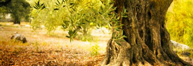 la cornula olio d oliva della puglia 4