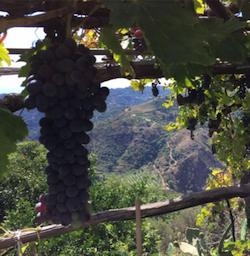 vino di bova RC degusteria I Platia 3