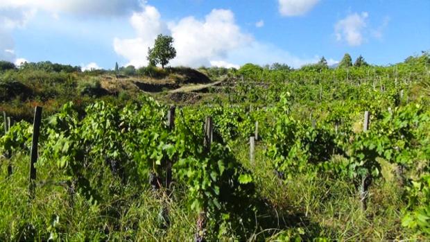 etnella vino come mosaico etna 1