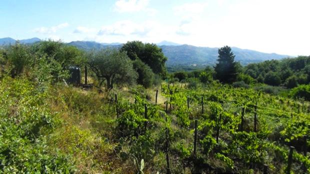 etnella vino come mosaico etna 4