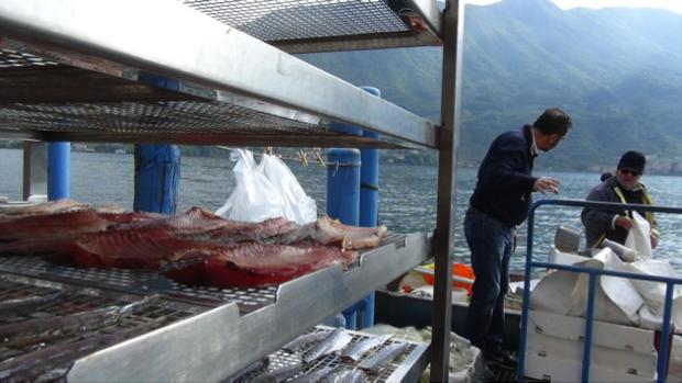sardina essiccata lago di iseo 2