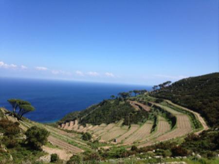 vini autoctoni isola di capraia 1