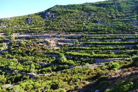 vini autoctoni isola di capraia 2