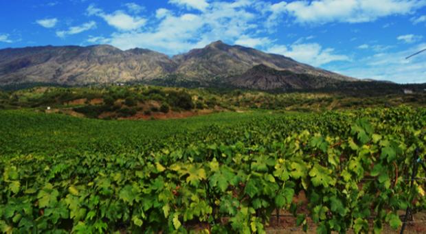 capoverde vini africani cuore piemontese 1