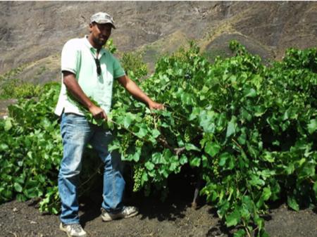 capoverde vini africani cuore piemontese 4