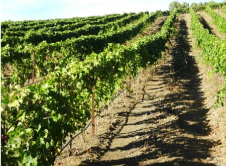 capoverde vini africani cuore piemontese 5