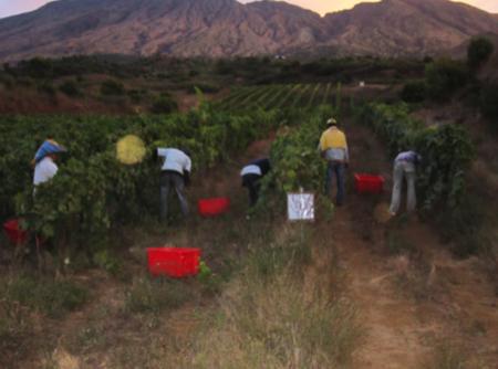 capoverde vini africani cuore piemontese 6