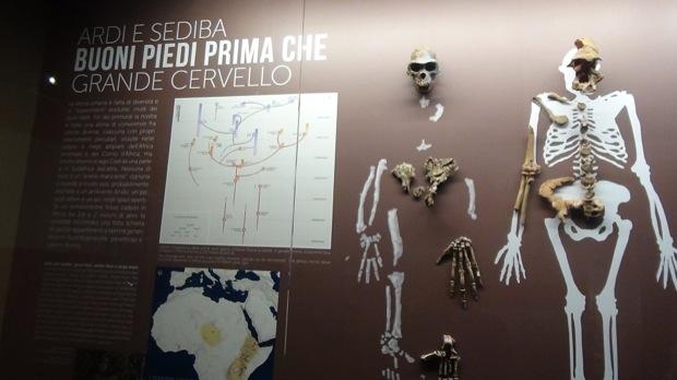 homo sapiens evoluzione al MUDEC milano 002