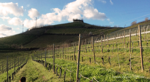 cascina ca rossa vini biologici roero 001