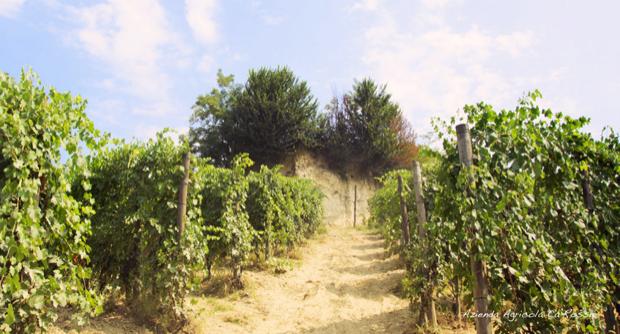 cascina ca rossa vini biologici roero 003