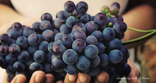 cascina ca rossa vini biologici roero 005