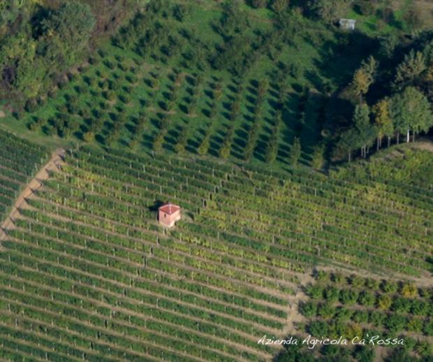 cascina ca rossa vini biologici roero 007