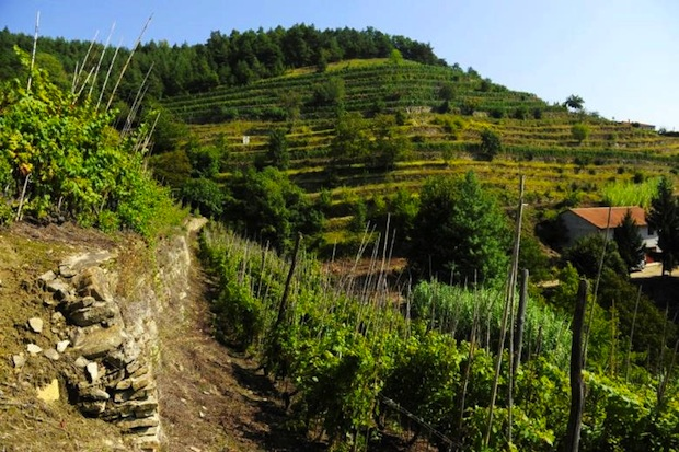 vino terrazzamenti val bormida 001