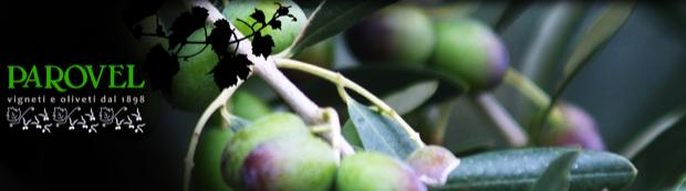 parovel olio oliva triestino 001