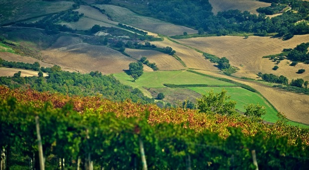 tintilia del molise vino Cipressi 003