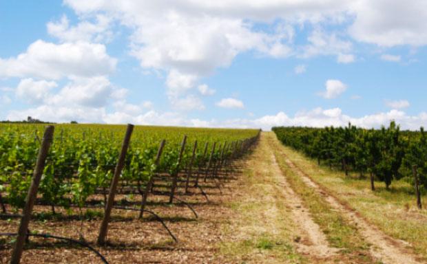 Cosa serve al mondo del vino italiano?