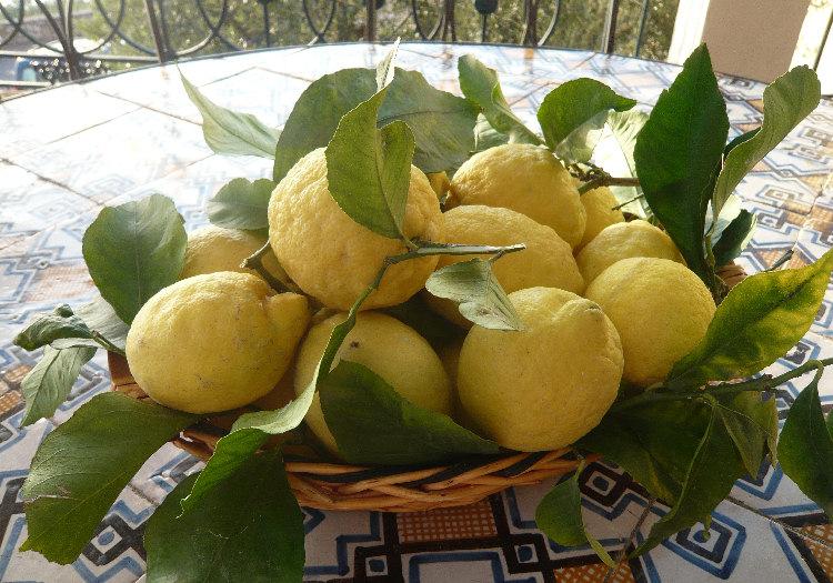 Limoni di Procida De.Co. (Campania)