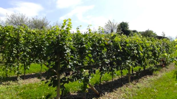 I Vini dell'Angelo, dal paradiso del Trentino