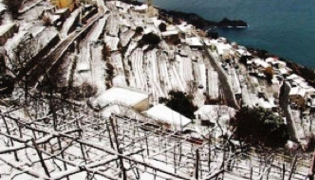 Fiorduva, vino eroico campano dagli antichi autoctoni di Furore