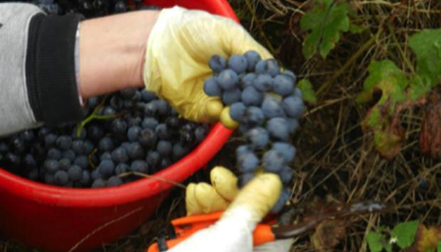 Il vino dei vigneti adottati della Valtellina