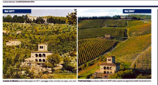 Scontro tra Regione Toscana e produttori di vino sul Paesaggio: troppi filari e poca anima