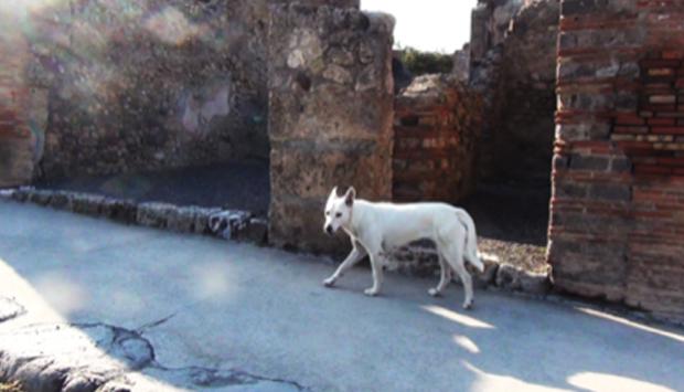 Cani abbandonati dai turisti a Pompei: ma gli scavi li adottano