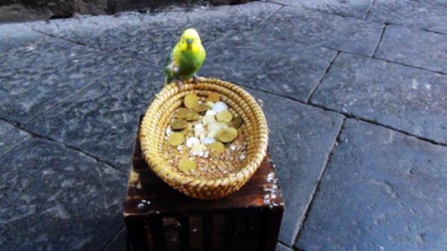 Uccellino messo a chiedere l'elemosina in strada, a Noto (Siracusa): spettacolo o barbarie?