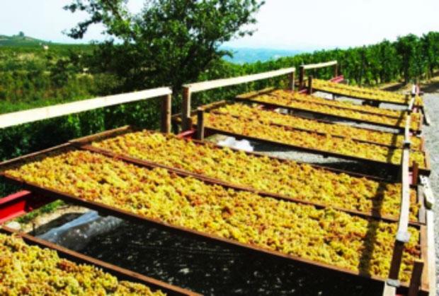 Moscato passito della Valle Bagnario di Strevi, Presidio Slow Food del Piemonte