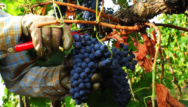 Tenuta Ulisse, in Abruzzo la pura elegia del vino sincero