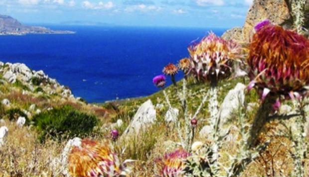 Riserva di Monte Cofano, la bellezza Naturale di Custonaci (TP)