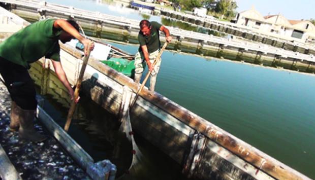 La pesca nelle Valli di Comacchio: la psicologia come esca