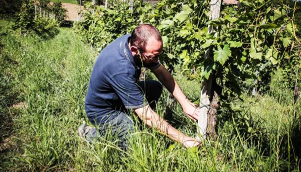 I vini sinceri di Quaquarini: i magnifici rossi dell'Oltrepò Pavese