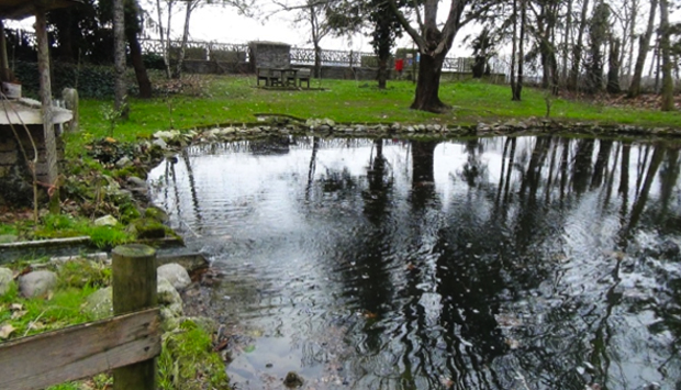 Cos'è e come nasce l'acqua di risorgiva per le risaie del veronese