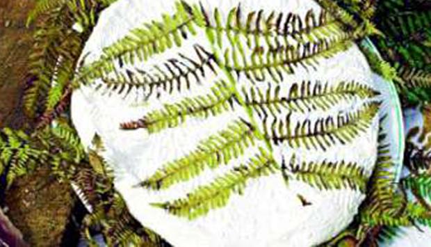 Il Raviggiolo, raro antico latticino dell'Appennino tosco romagnolo
